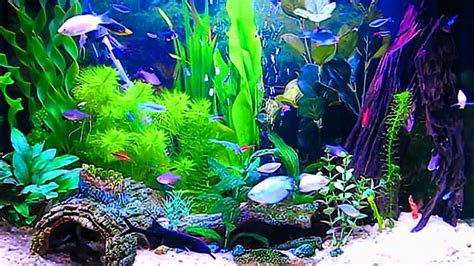 Animated Fish Tank Wallpaper Windows 7 - aquarium wallpaper moving windows 10 wallpapersafari