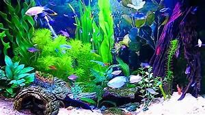 Aquarium Live Wallpaper Windows 10 - WallpaperSafari