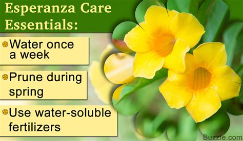 How To Care For An Esperanza Plant And Adorn Your Garden