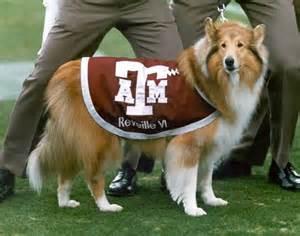 Reveille Texas A&M University Mascot