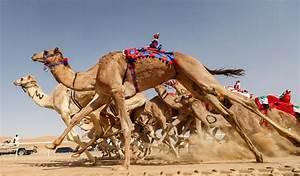 Course De Chameau : en images les robots qui font la course dos de chameau middle east eye dition fran aise ~ Medecine-chirurgie-esthetiques.com Avis de Voitures