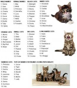 top cat names best 25 cat names ideas on boy puppy names