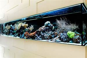 Aquarium Als Raumteiler : das aquarium als raumteiler ~ Michelbontemps.com Haus und Dekorationen