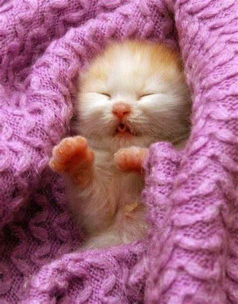 15 Very Cute Baby Cat Pics  Cutest Cats