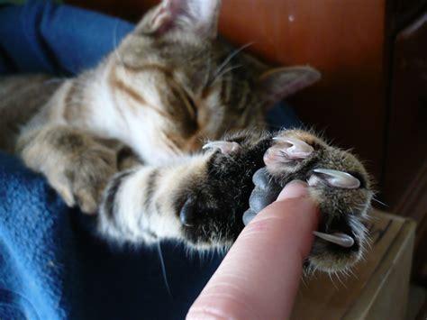 comment eviter les griffes de chat sur canape eviter chat griffe canape 28 images test 201 pour vous les prot 232 ge griffes sont ils une