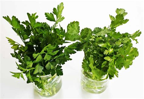 how to herbs how to store parsley cilantro and other fresh herbs simplyrecipes com
