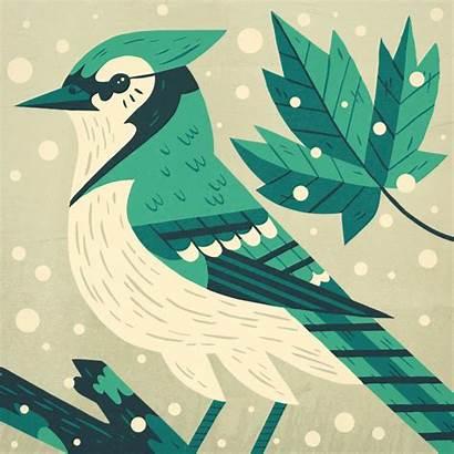 Owen Davey Jay Illustration Bird Birds Illustrations