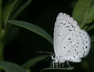 Black_and_White_Butterfly.jpg (1261×972)   You wouldn't ...