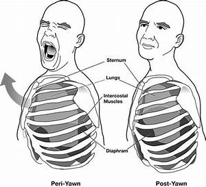 A Simple Guide On How To Stop Yawning