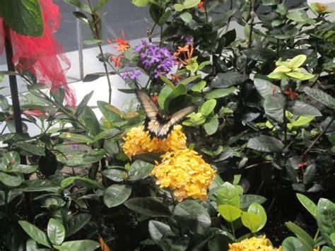 audubon butterfly garden and insectarium audubon insectarium butterfly garden picture of audubon