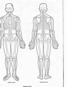 blank muscle diagram to label sketch coloring page With a body diagram