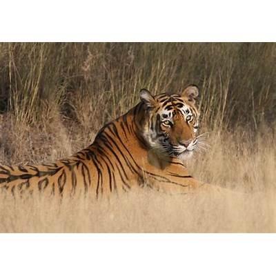 5 Must-See Wildlife Sanctuaries in India - Geringer Global