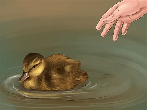 How To Hatch A Mallard Duck Egg 14 Steps With Pictures