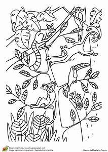 Jeux De Jungle : coloriage du jeu du cache cache des animaux de la jungle ~ Nature-et-papiers.com Idées de Décoration