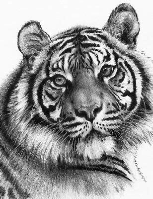 malen mit bleistift sketching skizzieren malen mit bleistift wei 223 er tiger portrait komplettset eur 7 99