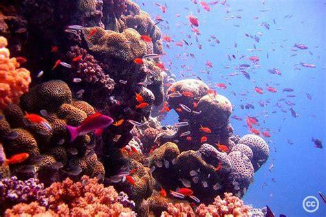 Klimata pārmaiņas un koraļļu rifu izzušana Indijas okeānā ...