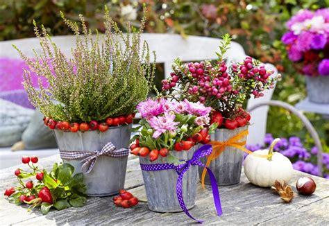 Garten Pflanzen Umsetzen by Herbst Pflanzen Und Deko F 252 R Balkon Und Terrasse