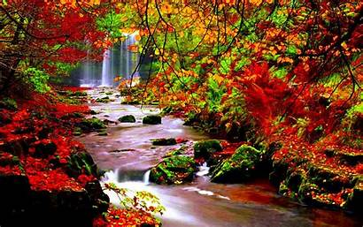 Autumn Scenery Desktop River Leaves Stream Trees