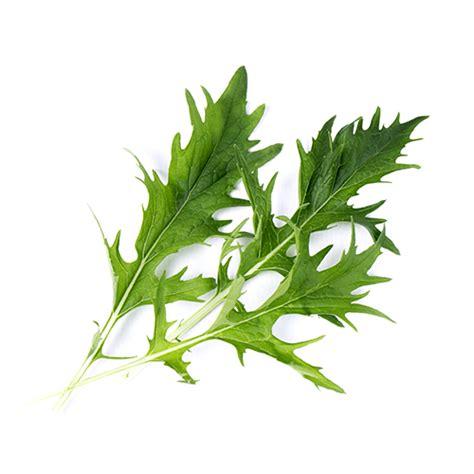 cuisiner des feuilles de blettes nouveaux lingots découvrez 7 recettes pour vos jeunes