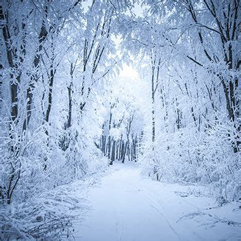 Fairy Winterland 8x8ft Winter backdrops Snow forest