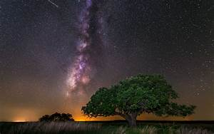 Tree Galaxy Milky Way Night Stars wallpaper | 1920x1200 ...