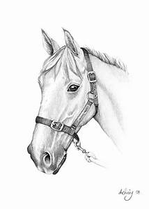 Pencil Drawings of horses | Carolina Cup | Pinterest ...