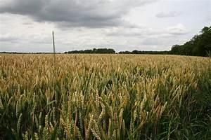 Field Crop images