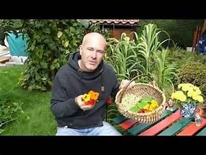 Heidelbeeren Pflanzen Zeitpunkt : kapuzinerkresse als pesto butter salat pfeffer uvm youtube garten garten ~ Orissabook.com Haus und Dekorationen