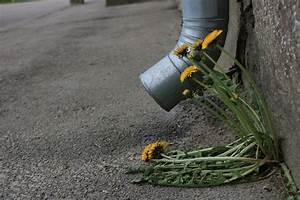 Unkraut Vernichten Mit Essig : unkrautvernichter selber machen unkrautvernichter selber machen gartenschaugartenschau ~ Orissabook.com Haus und Dekorationen