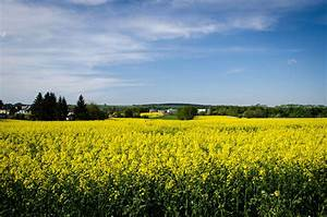 Yellow, Fields, And, A, Free, Download