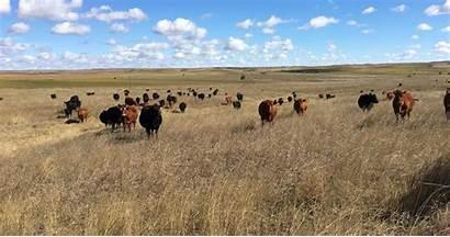 Grazing Biodiversity Rangelands Range