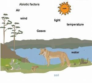Abiotic Factors Affecting Organisms Biologytutorvistacom
