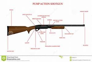 Labeled Shotgun Diagram Stock Image