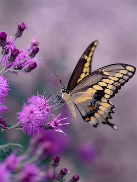 butterfly insect animal  invertebrate hd photo