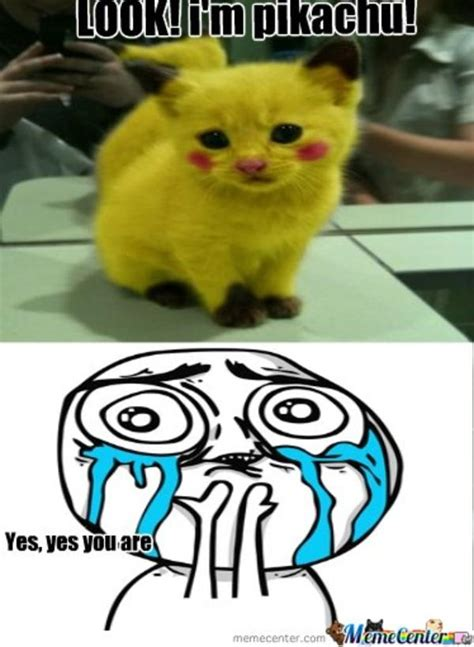 Overload Meme - cuteness overload meme memes