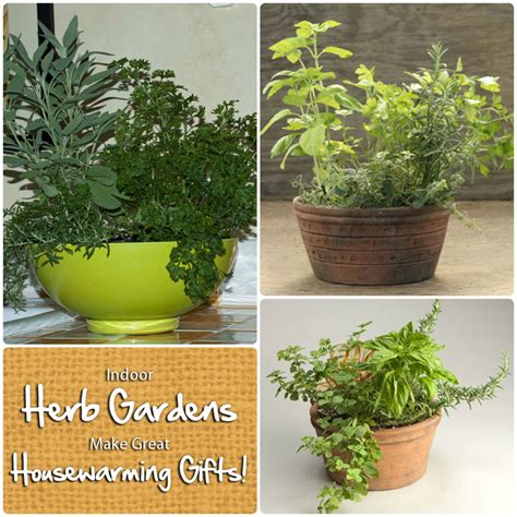 indoor herb gardens make wonderful housewarming gifts