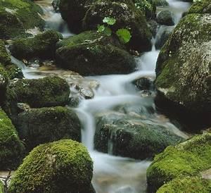 Wasser Steht In Der Spülmaschine : duden was ser rechtschreibung bedeutung definition synonyme herkunft ~ Orissabook.com Haus und Dekorationen