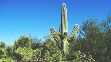 Amazon declines Tucson's cactus, but other kinds of gifts ...