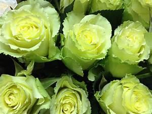 June is National Rose Month - Freytag's Florist