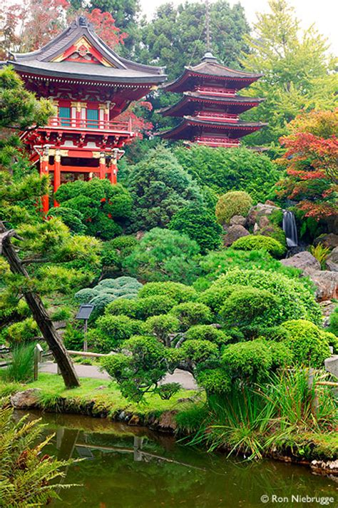 japanese tea garden san francisco beautiful scenery