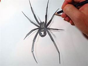 How To Draw Black Widow Spider - YouTube