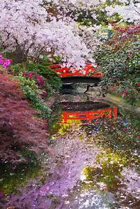 Design Japanese Koi Cherry Blossoms In The Japanese Garden At Descanso Gardens