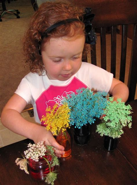queen annes lace food coloring fun fun pinterest