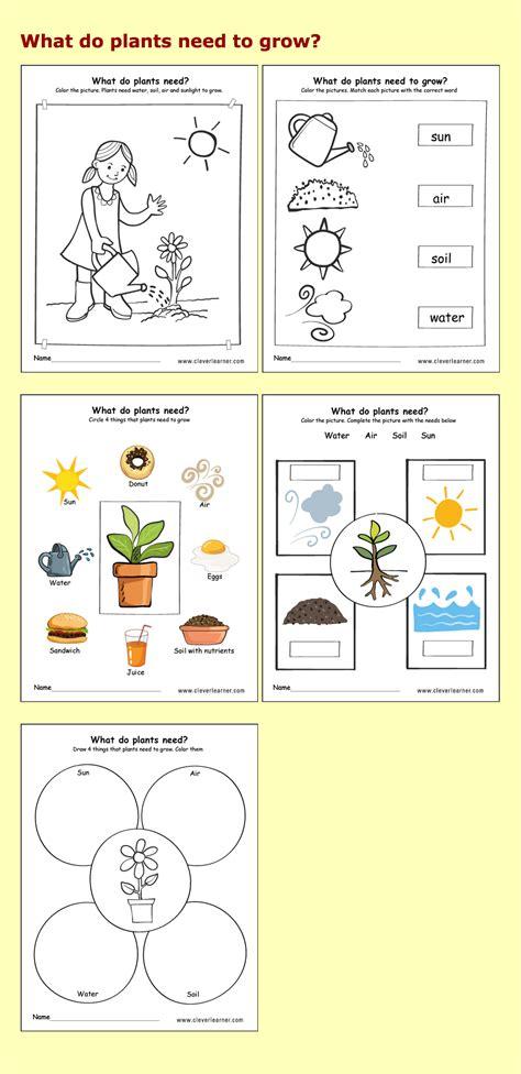 needs of plants kindergarten worksheets preschool
