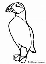 Puffin Coloring Outline Clip Popular Cat Designlooter Library Clipart Coloringhome President sketch template