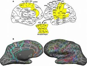 Speechlabel Parcellation Of The Cerebral Cortex   A  A