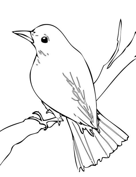 Nightingale #bird #drawing   Blossom & Bees   Pinterest
