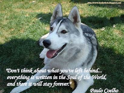 Funny Husky Quotes
