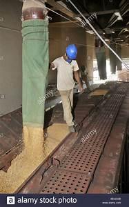 Loading A Freight Wagon With Soy  Uberlandia  Minas Gerais  Brazil Stock Photo  25914011
