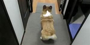 Dog Animated GIF